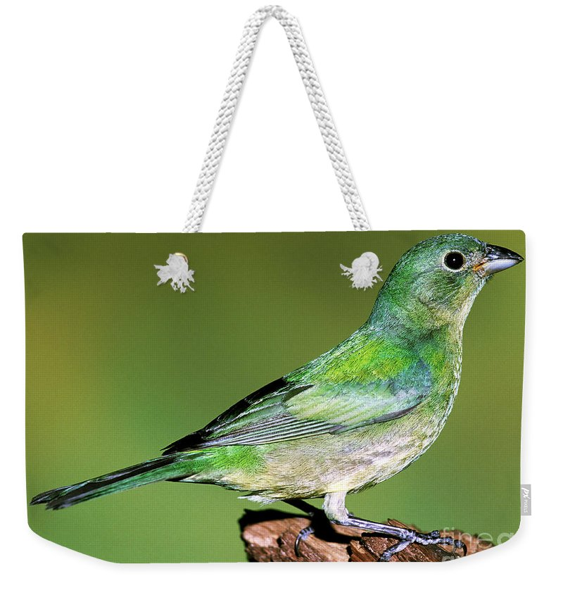 Nature Weekender Tote Bag featuring the photograph Painted Bunting by Millard H. Sharp