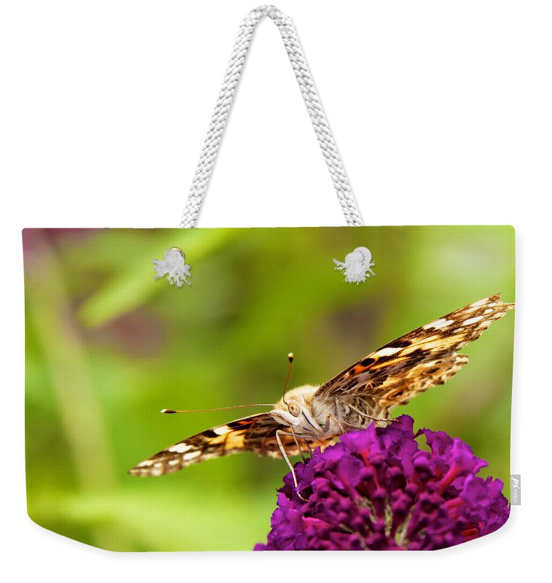Attractive Weekender Tote Bag featuring the photograph Painted Lady Butterfly by David Kay