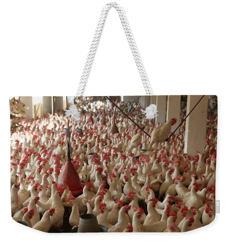 Agriculture Weekender Tote Bag featuring the photograph Pakistan-agriculture by Ton Koene