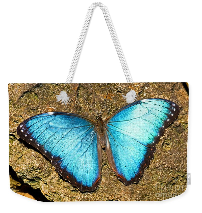 Nature Weekender Tote Bag featuring the photograph Peleides Blue Morpho by Millard H. Sharp