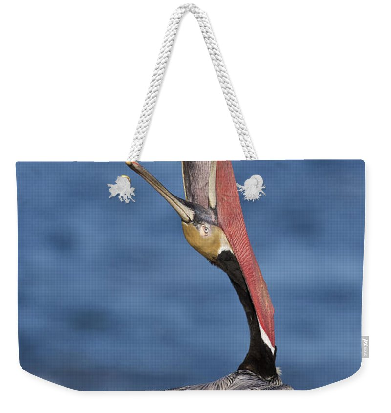 Pelican Weekender Tote Bag featuring the photograph Pelican Head Throw by Bryan Keil