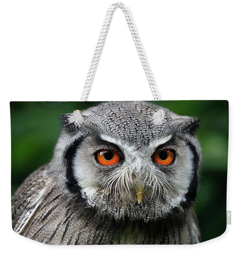 Adult Weekender Tote Bag featuring the photograph Petit Duc A Face Blanche Otus Leucotis by Gerard Lacz