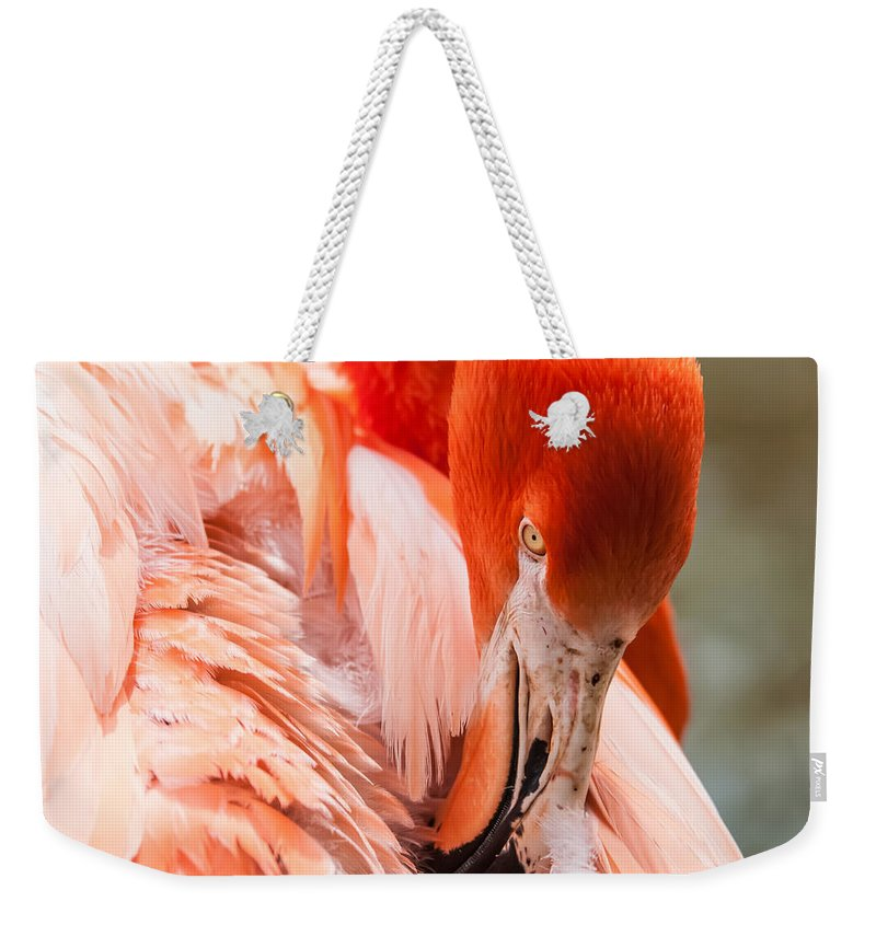 Flamingo Weekender Tote Bag featuring the photograph Pink Flamingo At A Zoo In Spring by Alex Grichenko