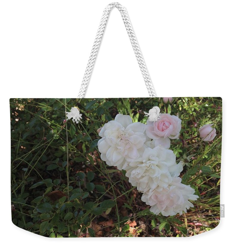 Pink Roses Weekender Tote Bag featuring the photograph Pink by Joseph Yarbrough