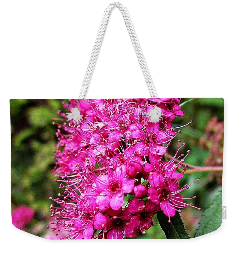 Pink Spirea Weekender Tote Bag featuring the photograph Pink Spirea by MTBobbins Photography