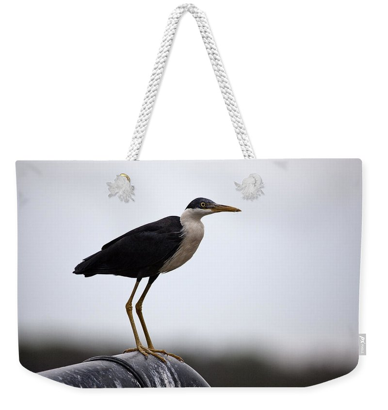 Pied-heron Weekender Tote Bag featuring the photograph Pipe Dream by Douglas Barnard