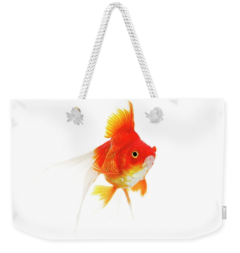 Adult Weekender Tote Bag featuring the photograph Poisson Rouge Queue De Voile Carassius by Gerard Lacz