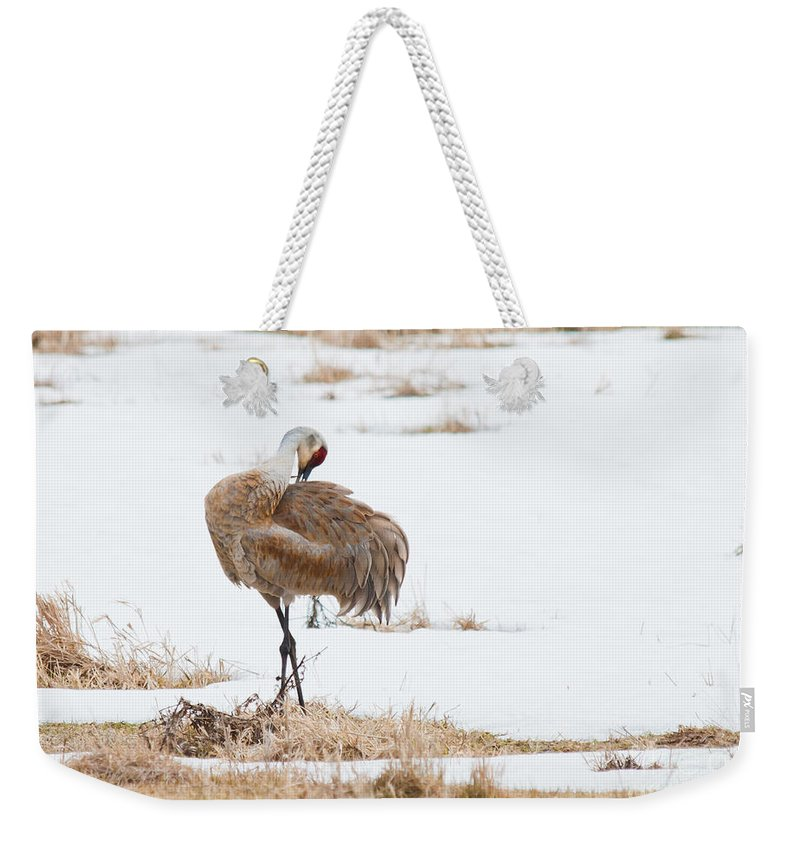 Weekender Tote Bag featuring the photograph Preening Crane by Cheryl Baxter
