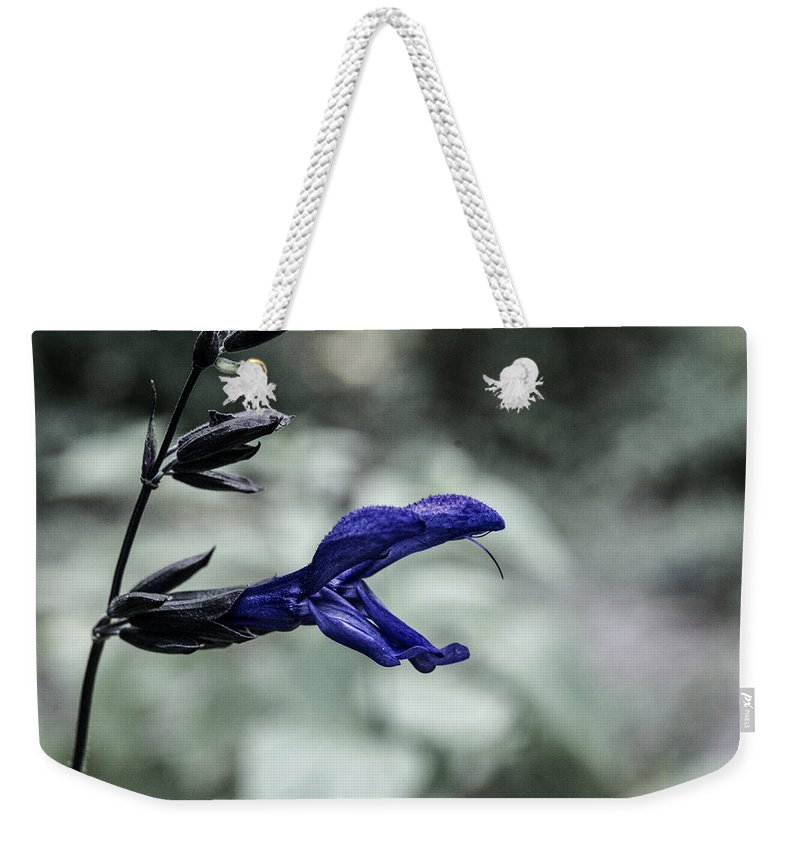 Plant Weekender Tote Bag featuring the photograph Purple Sage Blossom by Douglas Barnett