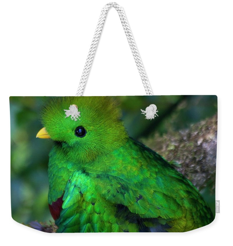 Bird Weekender Tote Bag featuring the photograph Quetzal by Heiko Koehrer-Wagner