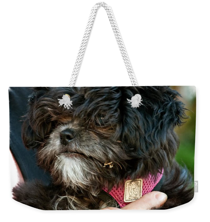 Ragamuffin Weekender Tote Bag featuring the photograph Ragamuffin by Steve Harrington