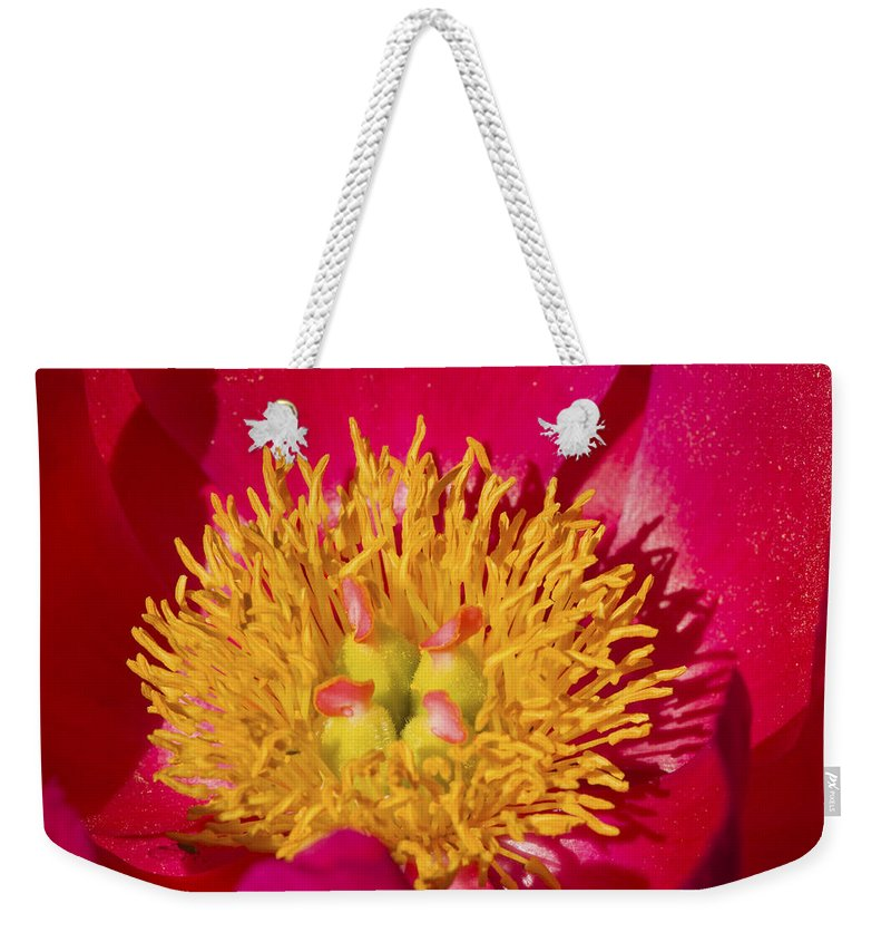 Red Weekender Tote Bag featuring the photograph Red Peony Flower by Keith Webber Jr