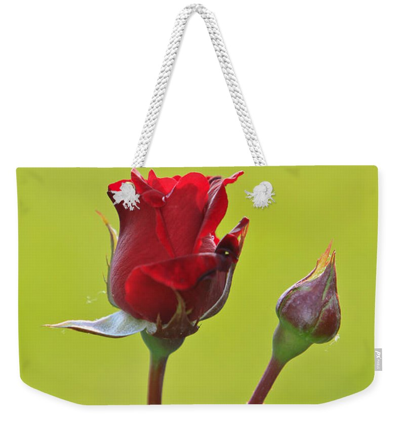 Red Weekender Tote Bag featuring the photograph Red Roses by Dan Radi
