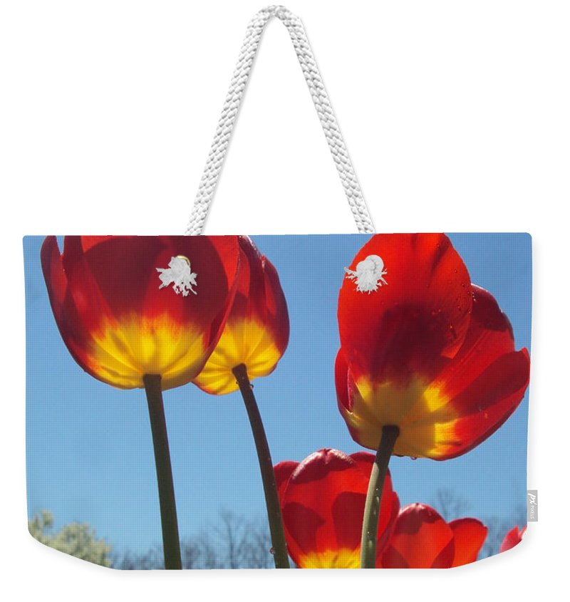 Red Weekender Tote Bag featuring the photograph Red Tulips With Blue Sky Background by Jennifer Wenzel