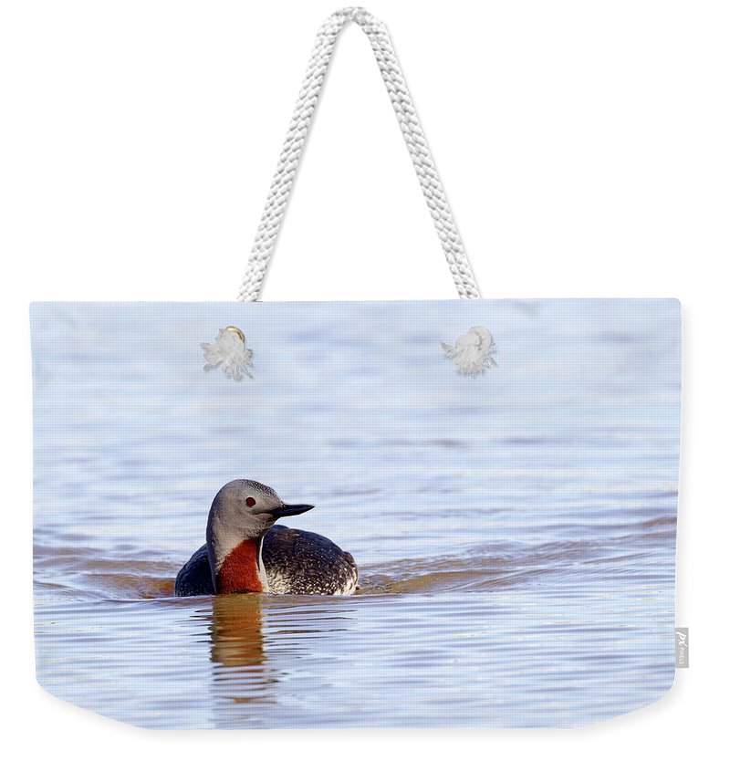 Doug Lloyd Weekender Tote Bag featuring the photograph Redthroated Loon by Doug Lloyd