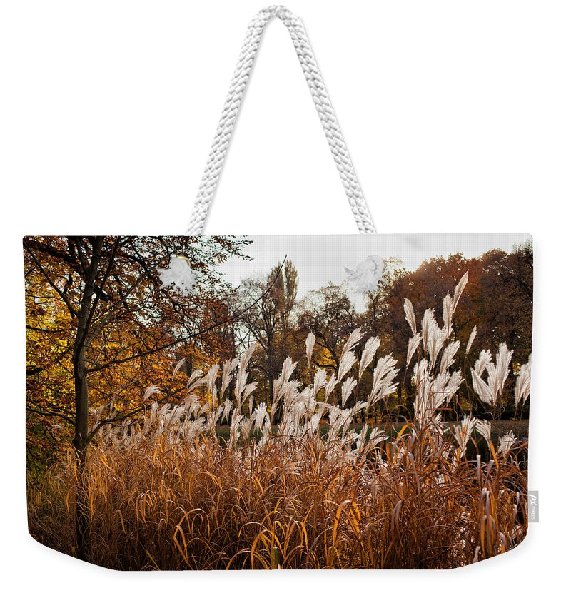Reed Weekender Tote Bag featuring the photograph Reeds Highlighted By The Sun by Artur Bogacki