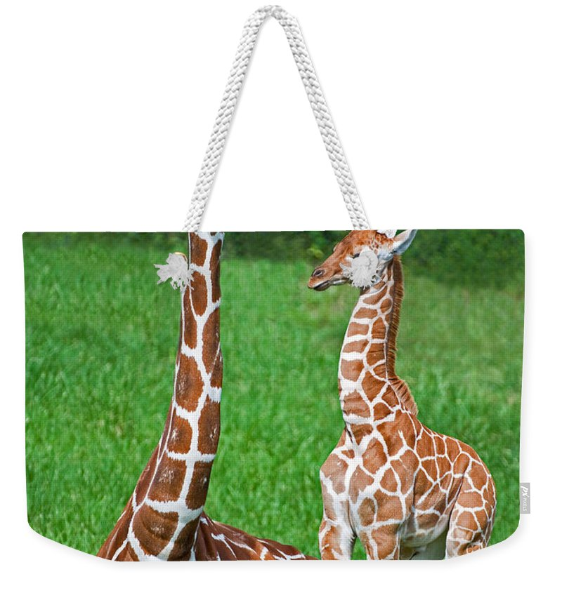 Nature Weekender Tote Bag featuring the photograph Reticulated Giraffe Calf With Mother by Millard H. Sharp