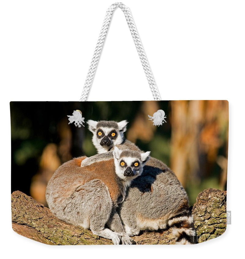 Ring-tailed Lemur Weekender Tote Bag featuring the photograph Ring Tailed Lemur by Millard H. Sharp