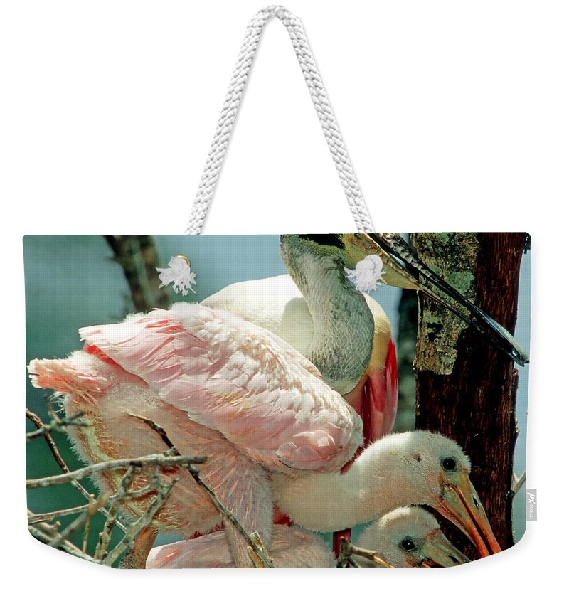 Animal Weekender Tote Bag featuring the photograph Roseate Spoonbill Adult With Young by Millard H. Sharp
