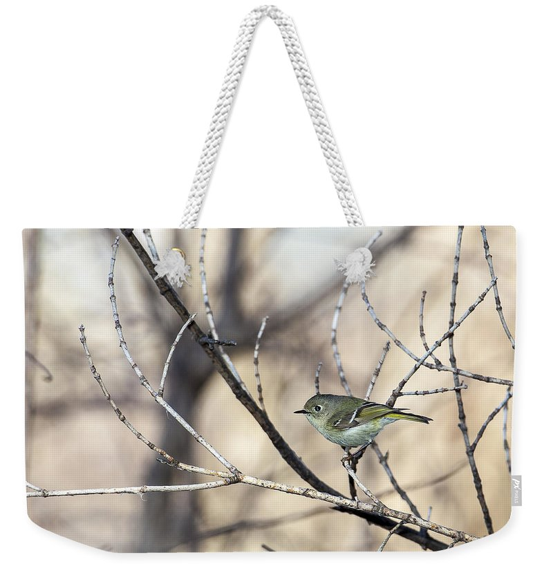 Animal Weekender Tote Bag featuring the photograph Ruby-crowned Kinglet by Jack R Perry