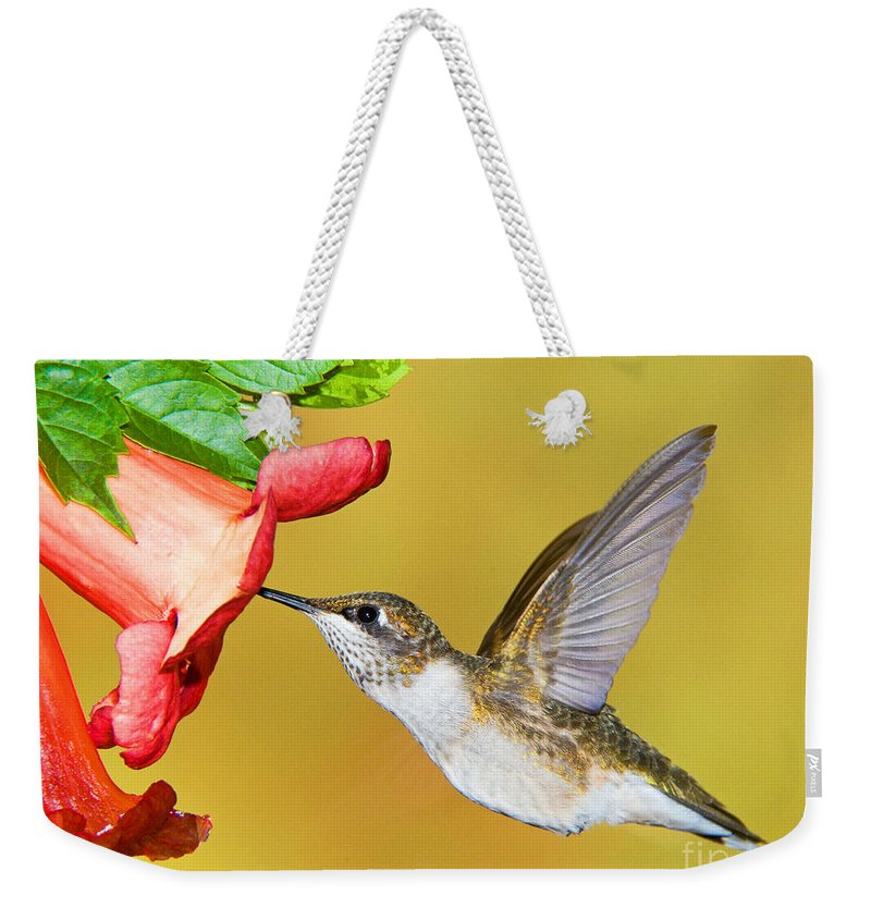 Nature Weekender Tote Bag featuring the photograph Ruby-throated Hummingbird Female by Millard H. Sharp