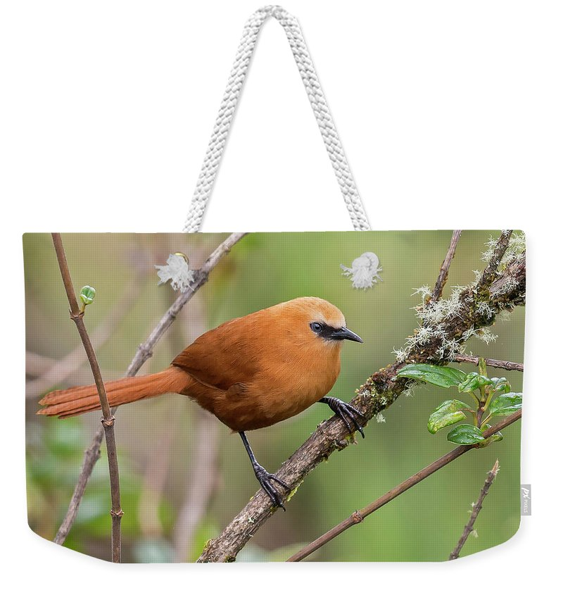 Birds Weekender Tote Bag featuring the photograph Rufous Wren by Juan Jose Arango
