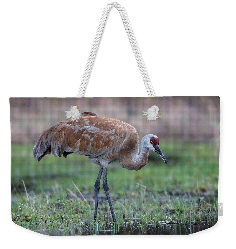 Sandhill Crane Weekender Tote Bag featuring the photograph Sandhill Crane by Jack Bell