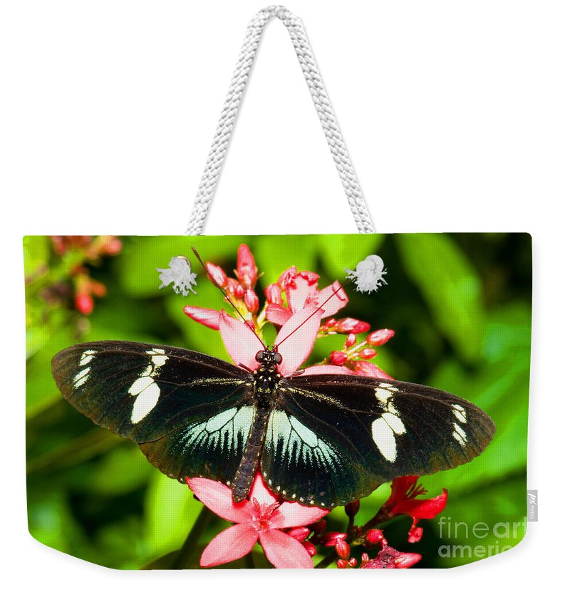 Nature Weekender Tote Bag featuring the photograph Sapho Longwing Butterfly by Millard H. Sharp
