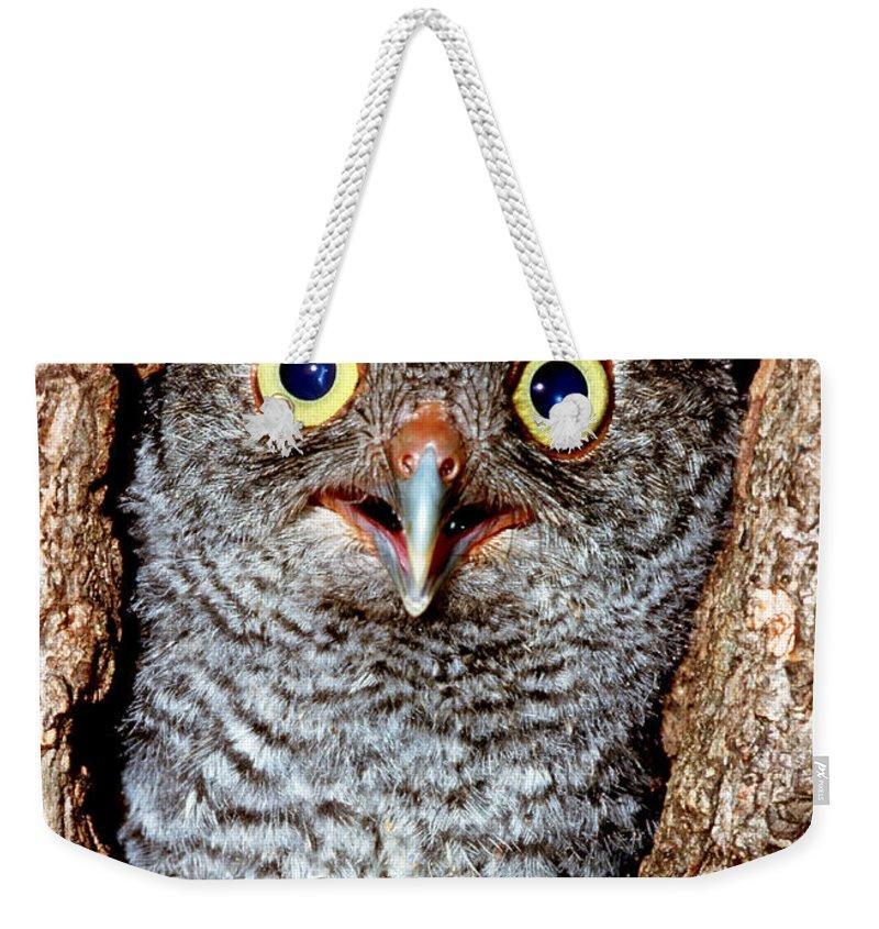 Screech Owl Weekender Tote Bag featuring the photograph Screech Owl by Millard H. Sharp