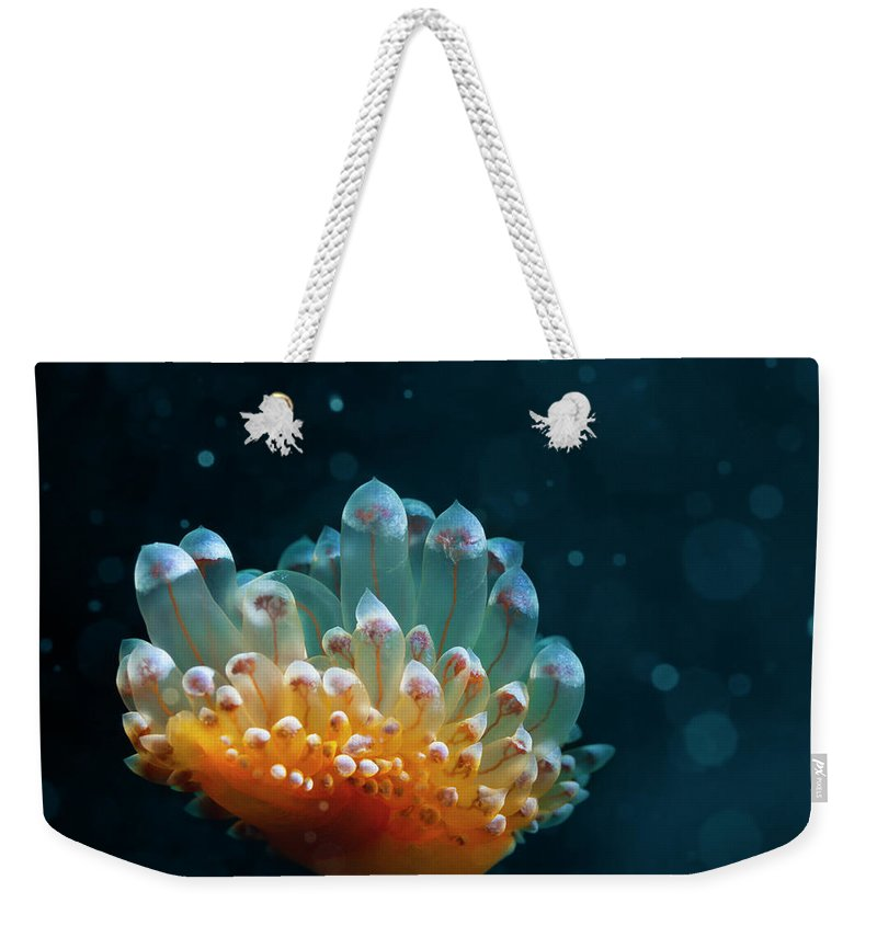 Underwater Weekender Tote Bag featuring the photograph Sea Life by Ultramarinfoto
