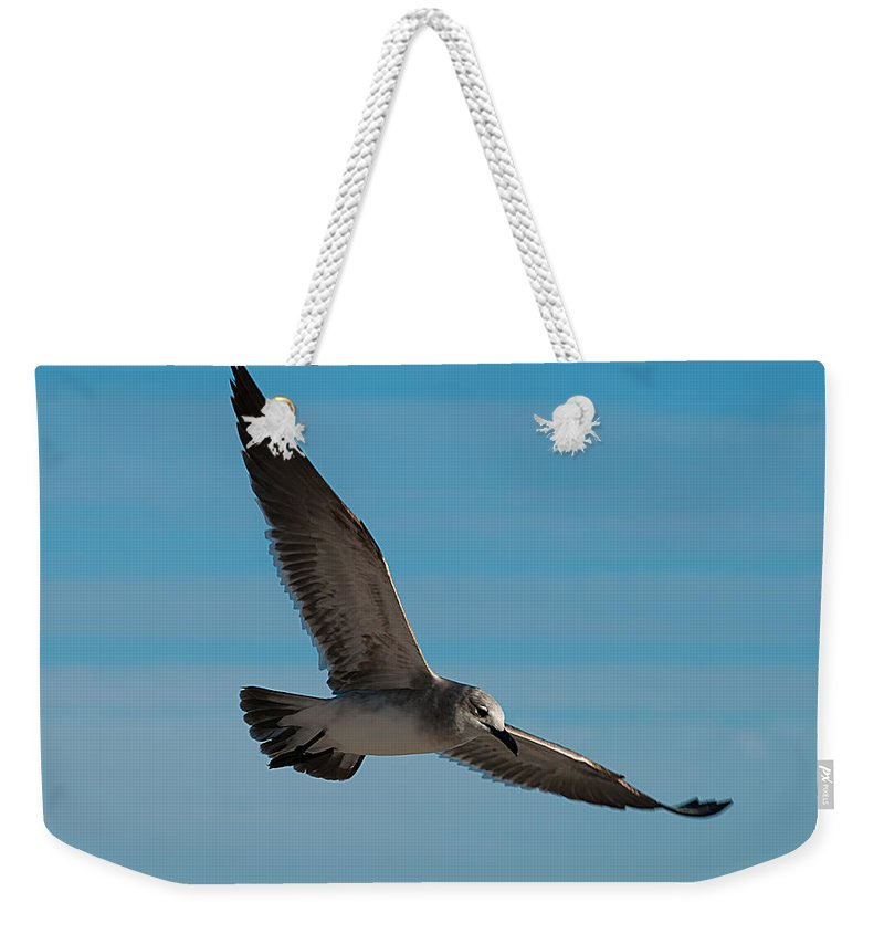 Sea Weekender Tote Bag featuring the photograph Seagull In Flight by Photos By Cassandra