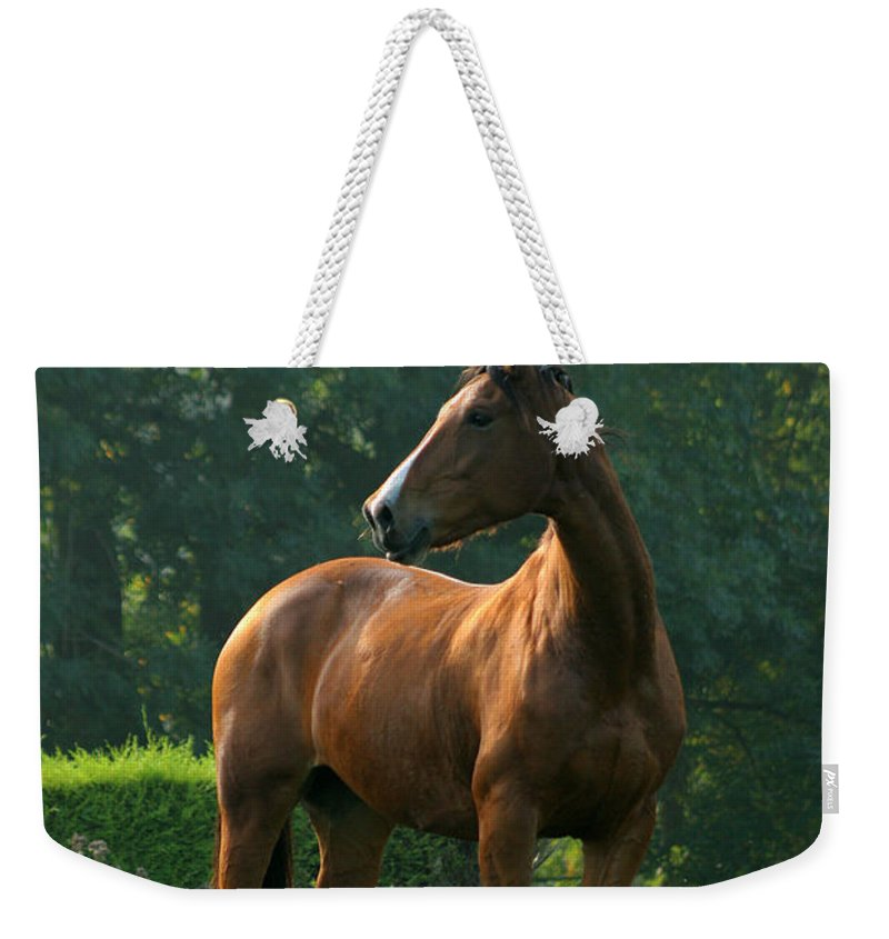 Horse Weekender Tote Bag featuring the photograph Sentinel by Angel Ciesniarska