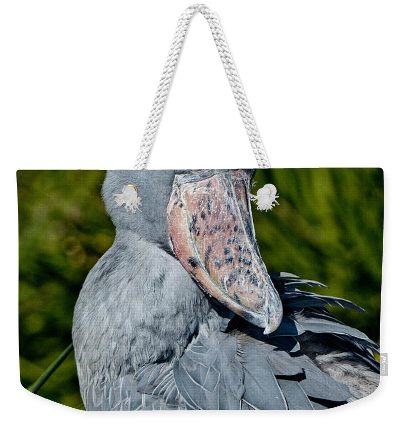 Animal Weekender Tote Bag featuring the photograph Shoebill Stork by Anthony Mercieca
