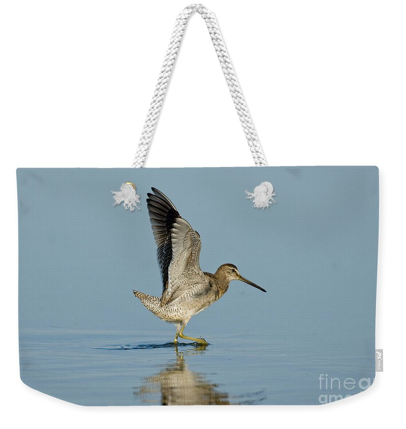 Short-billed Dowitcher Weekender Tote Bag featuring the photograph Short-billed Dowitcher by Anthony Mercieca
