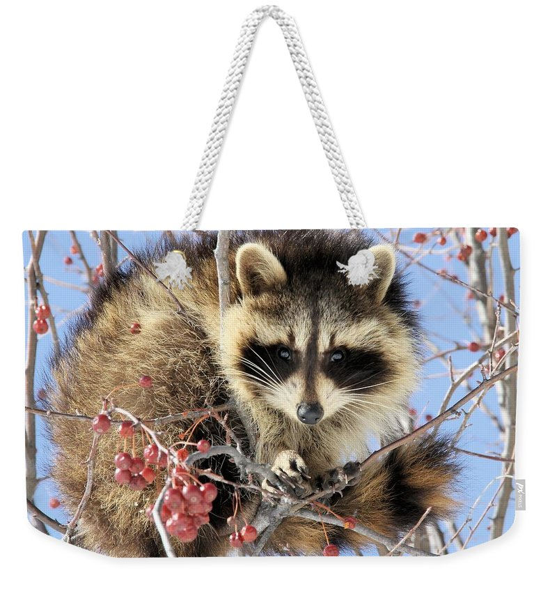 Raccoon Weekender Tote Bag featuring the photograph Sitting Pretty by Doris Potter