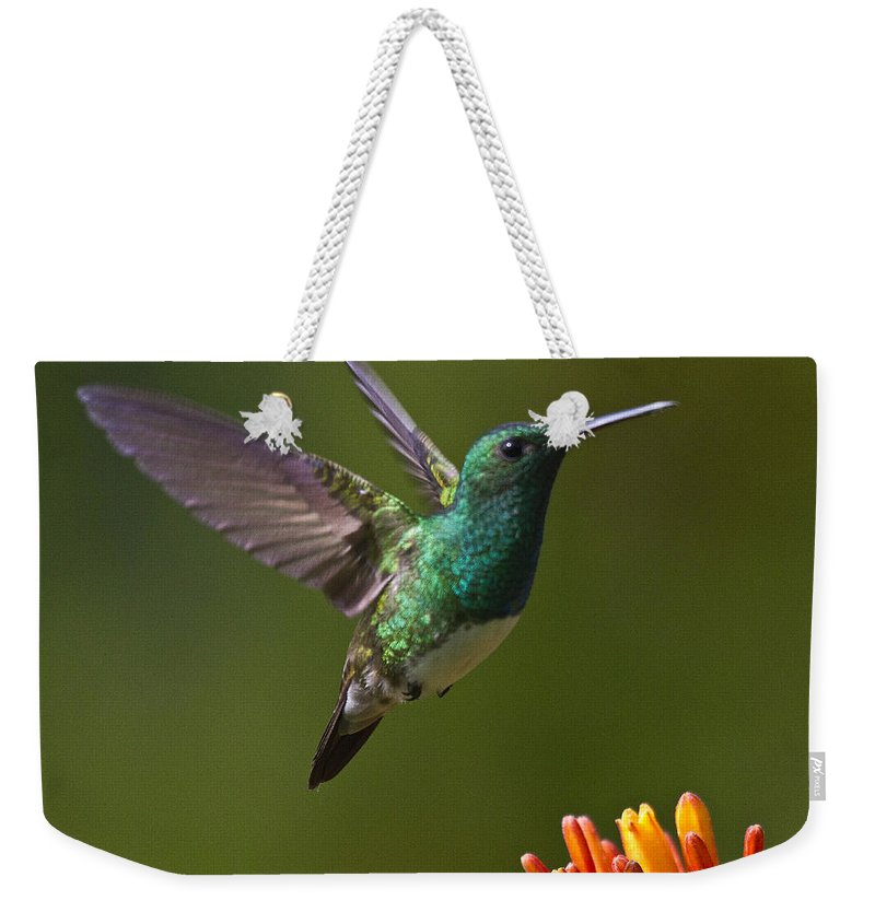 Bird Weekender Tote Bag featuring the photograph Snowy-bellied Hummingbird by Heiko Koehrer-Wagner