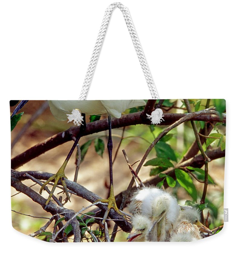 Snowy Egret Weekender Tote Bag featuring the photograph Snowy Egrets by Millard H. Sharp