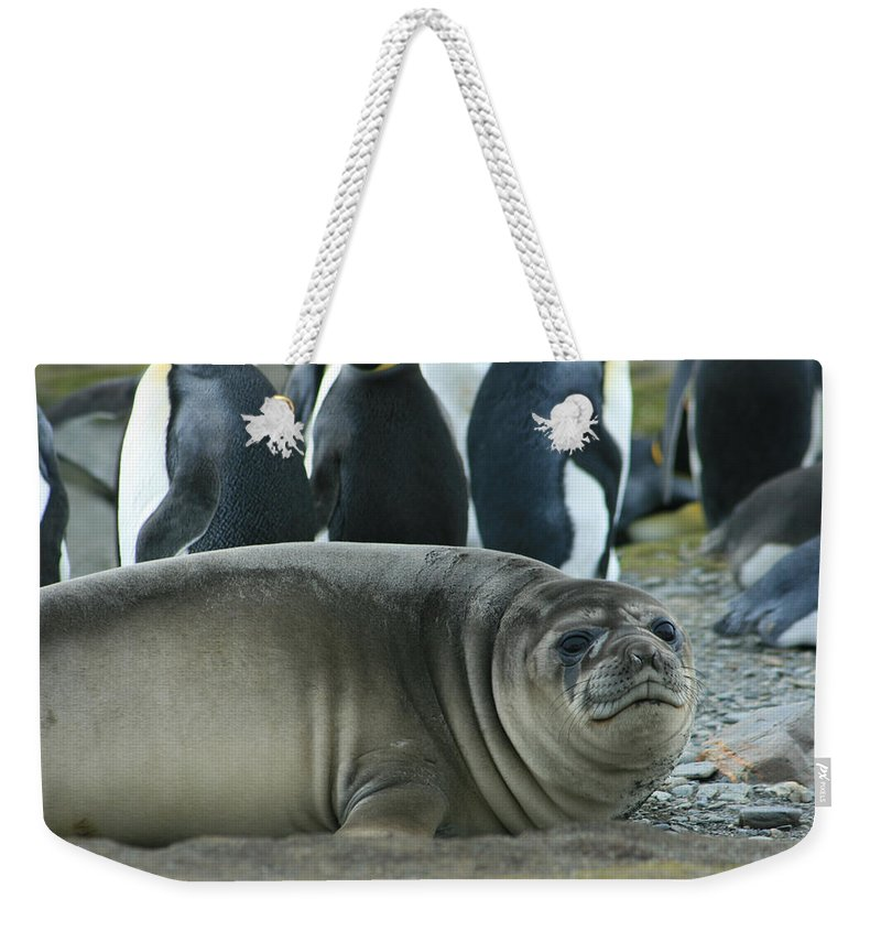 Juvy Elephant Seal Weekender Tote Bag featuring the photograph Southern Elephant Seal by Amanda Stadther