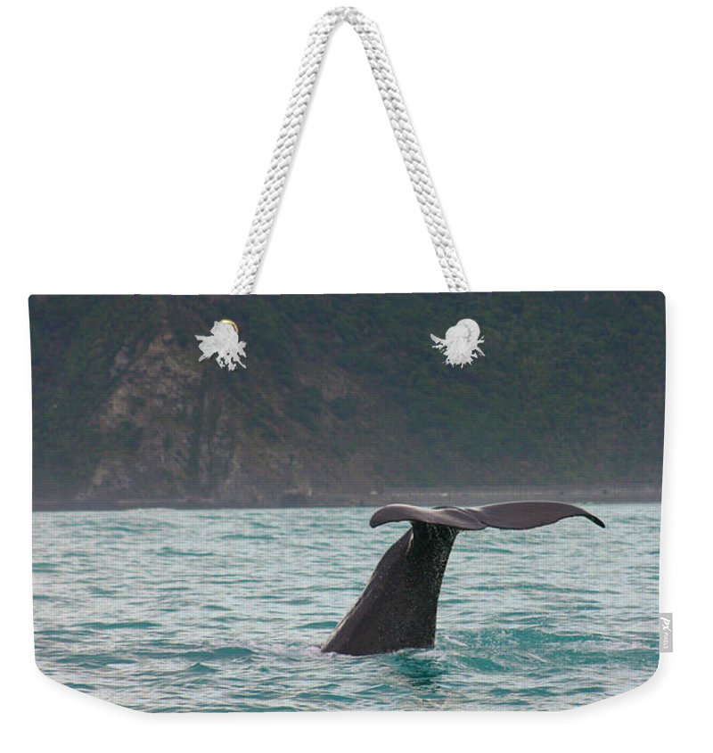 Whale Weekender Tote Bag featuring the photograph Sperm Whale Diving by Amanda Stadther