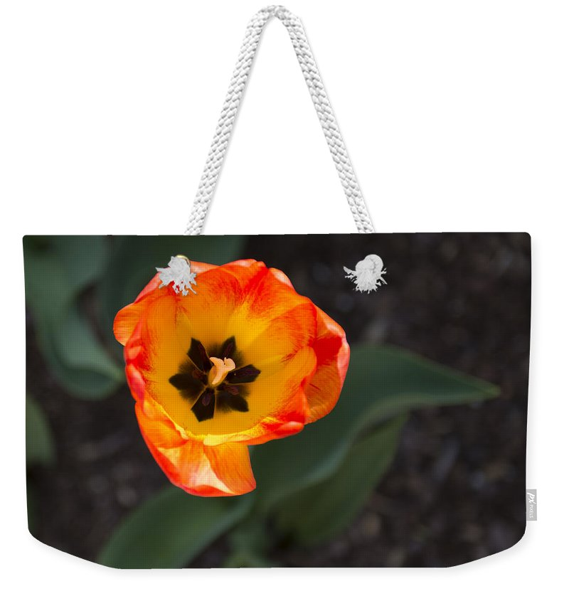Spring Flowers Weekender Tote Bag featuring the photograph Spring Flowers No. 10 by Greg Hager
