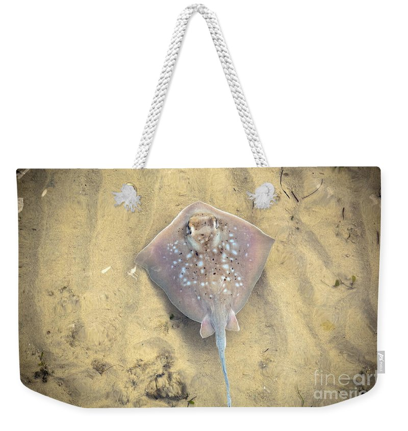 Aquatic Weekender Tote Bag featuring the photograph Stingray by Tim Hester
