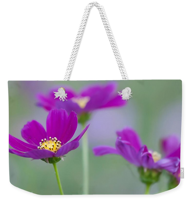 White Weekender Tote Bag featuring the photograph Summer Flowers On Meadow by Alex Grichenko