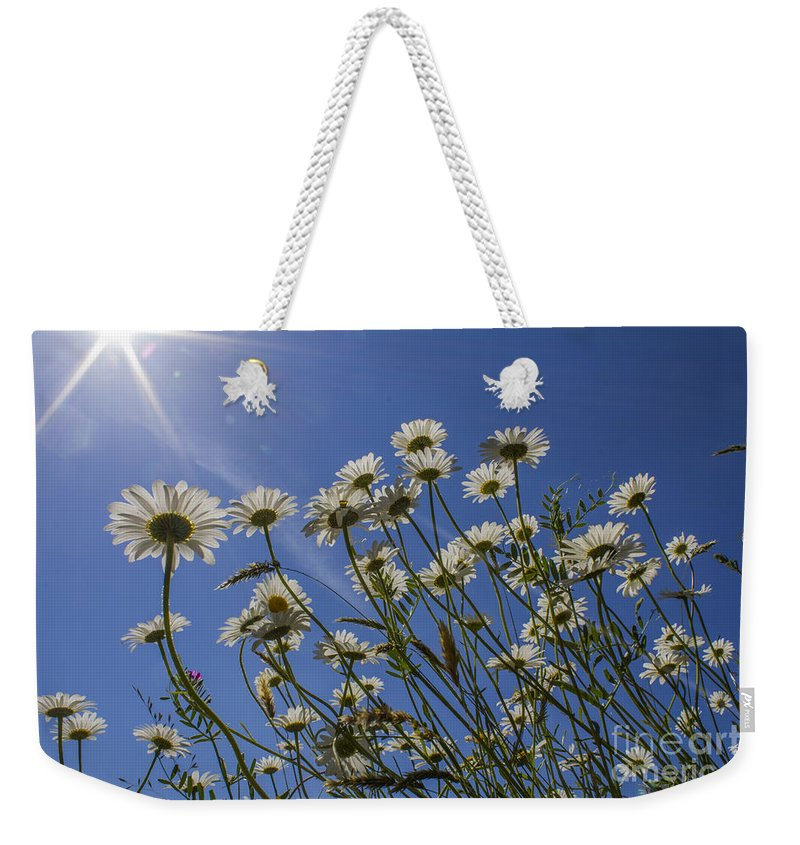 Floral.flower Weekender Tote Bag featuring the photograph Sun Lit Daisies by Brian Roscorla