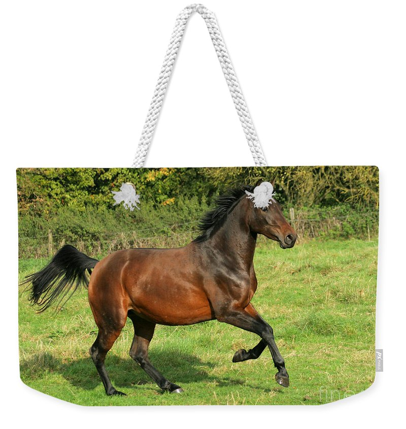 Horse Weekender Tote Bag featuring the photograph Take-off by Angel Ciesniarska