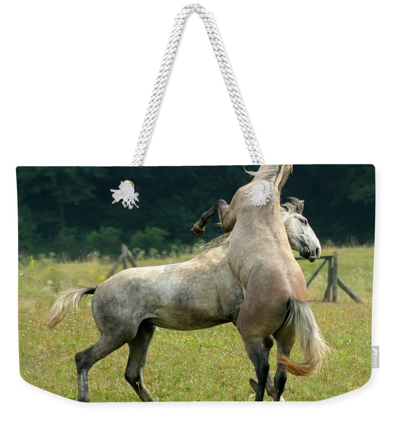 Horse Weekender Tote Bag featuring the photograph The Fight by Angel Tarantella