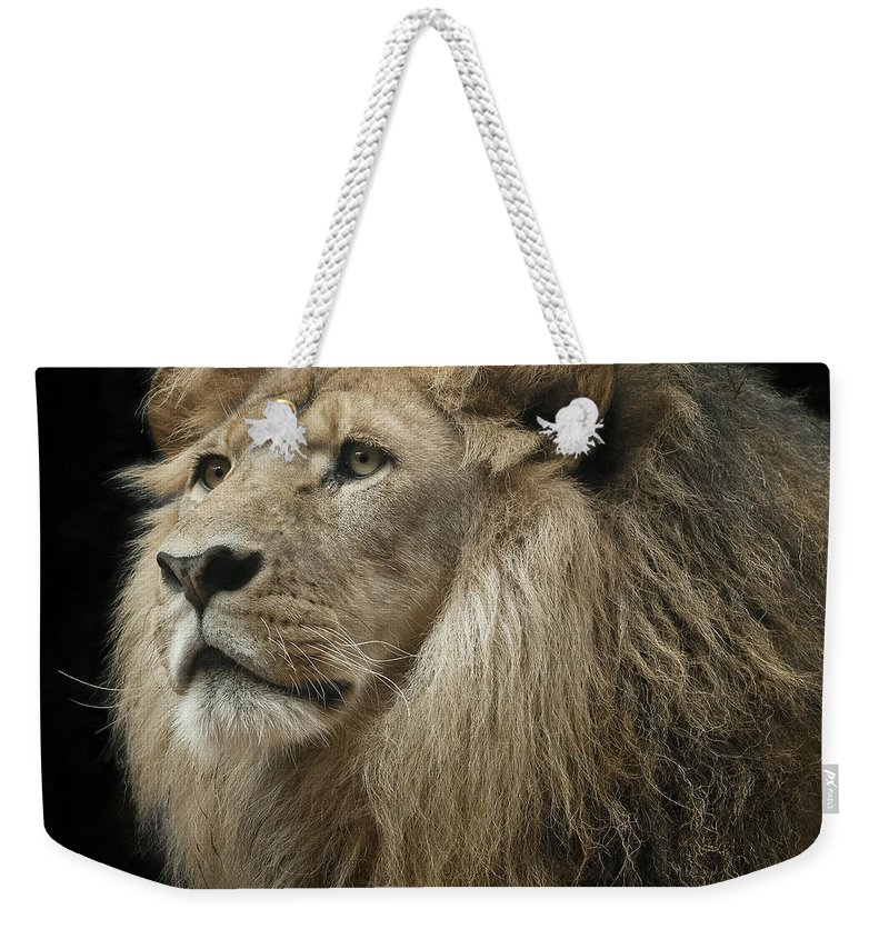 Resting Weekender Tote Bag featuring the photograph The King by Linda D Lester