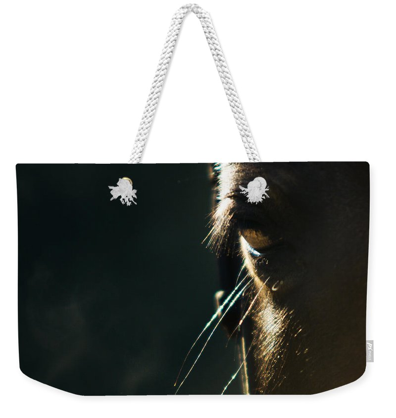 Horse Weekender Tote Bag featuring the photograph the Look by Angel Tarantella
