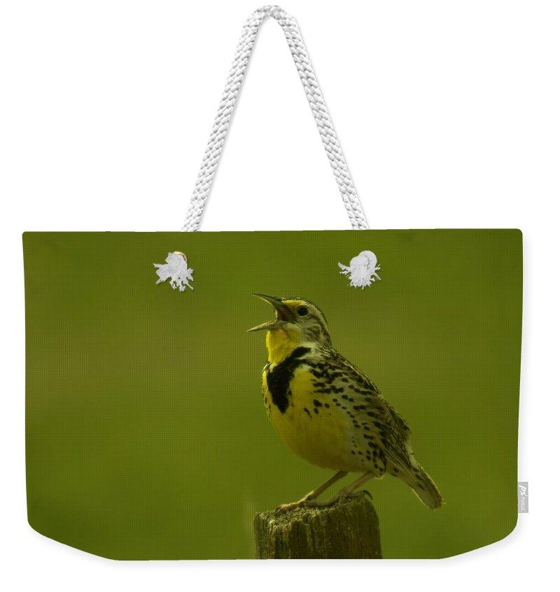 Birds Weekender Tote Bag featuring the photograph The Meadowlark Sings by Jeff Swan