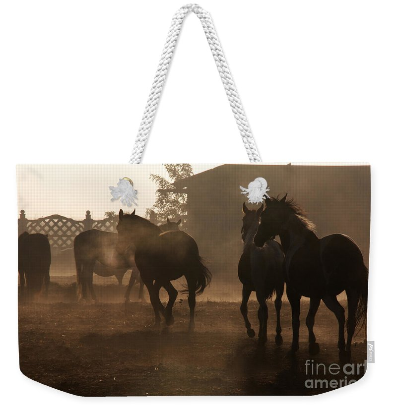 Misty Morning Weekender Tote Bag featuring the photograph The Misty Morning by Angel Ciesniarska