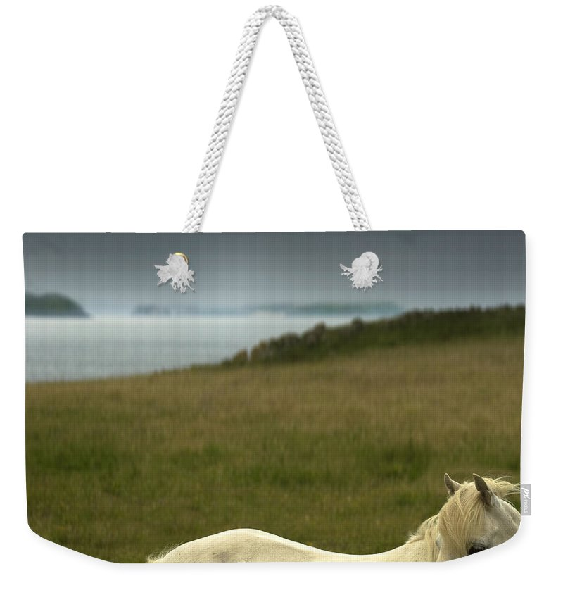 Welsh Pony Weekender Tote Bag featuring the photograph The Welsh Pony by Angel Tarantella